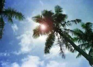 شمس الصيف